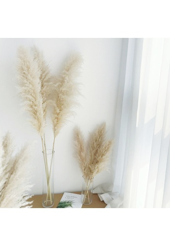 Propstation Dried Preserved Pampas Grass Creamy White in Cylinder Glass Vase - Set of 3 91512HL47389A9GS_1