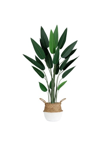 Propstation Potted Faux Bird of Paradise Tree 160cm with White Seagrass Basket D4755HLAD46EA8GS_1