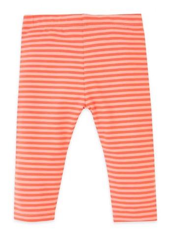 MARKS & SPENCER orange Cotton Leggings 205A9KA62C1434GS_1