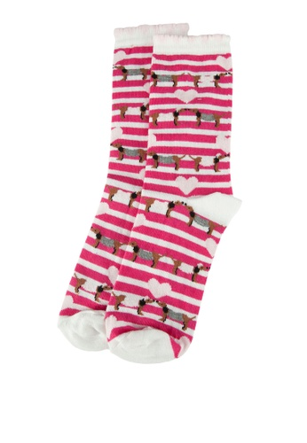 Dorothy Perkins white and red and multi Sausage Dog Socks 95E5CAAB293954GS_1