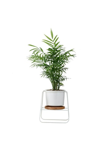 DILAS HOME Plant Pot with Wire Stand and Tray (White) 661A6HL1451E11GS_1